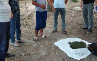 Олмалиқда марихуана қовураётган шахслар ушланди (фото)