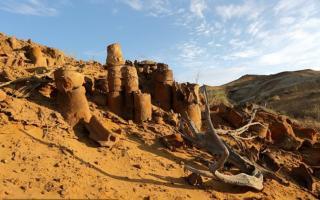 Ўзбекистонда номаълум турдаги динозавр қолдиқлари топилди